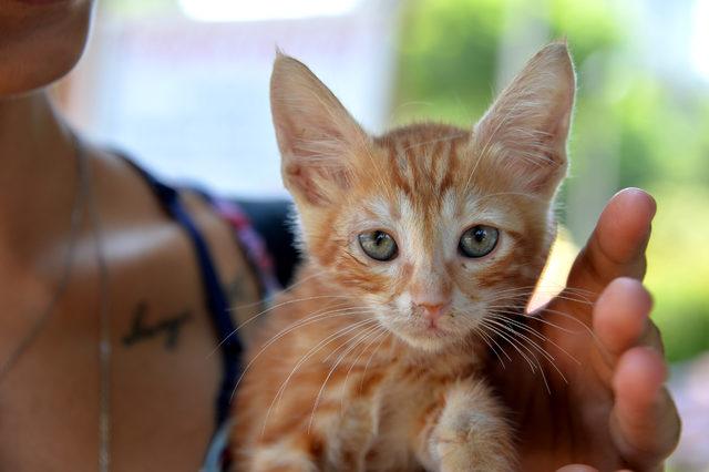 Adana'da gönüllüler kedi parkı kurdu