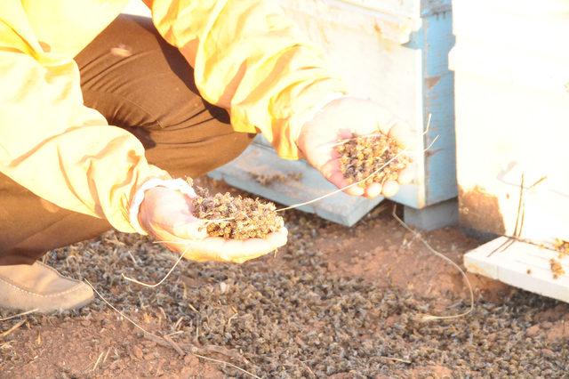 Akçakale'de toplu arı ölümleri üreticileri endişelendirdi