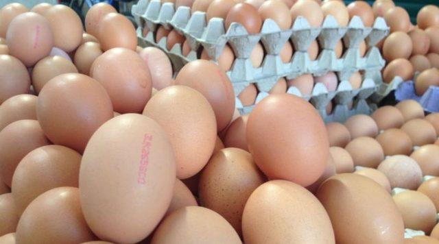 yumurta 3