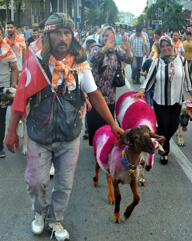Asırlık yarışma öncesi koyunlarla renkli kortej yürüyüşü