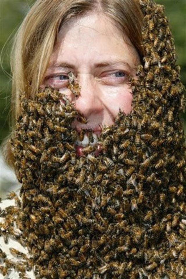 Картинки, пчеловоды картинки смешные