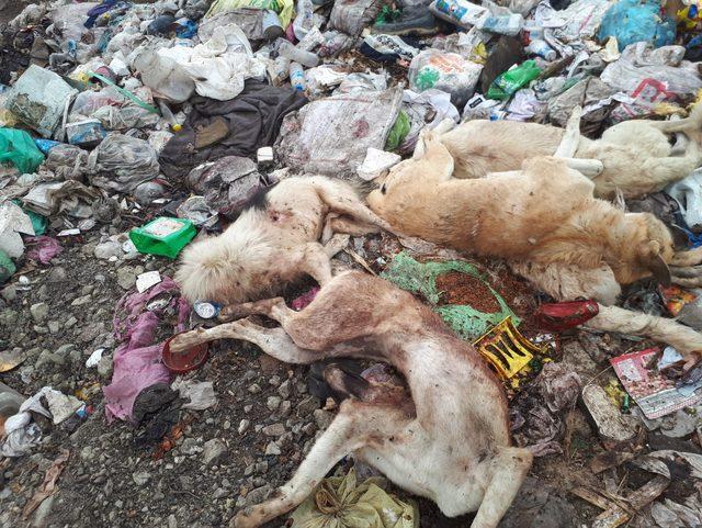 Çöp depolama alanında silahla vurulan 8 köpek ölüsü buldular
