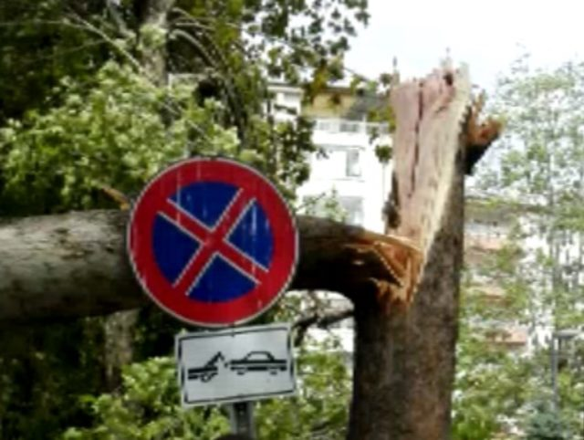 Cuma namazında cemaatin üzerine ağaç devrildi