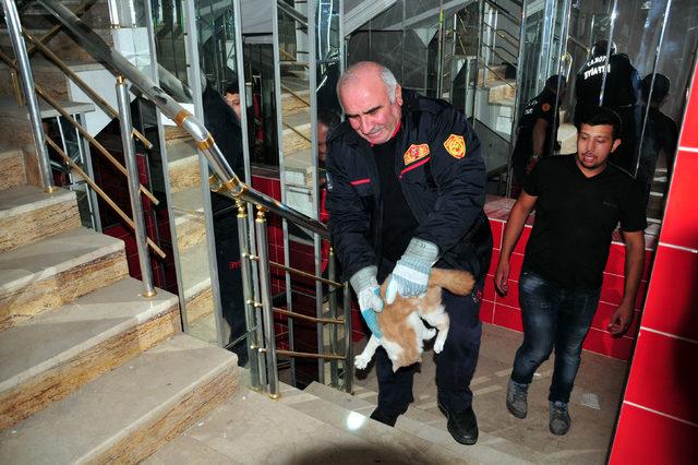 Dükkanda 1 haftadır mahsur kalan kediyi itfaiye kurtardı