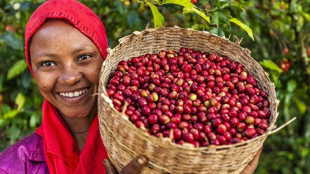 Kahvenin doğum yerinin Etiyopya olduğu düşünülüyor ve kahve içme ritüeli hala meşhur.