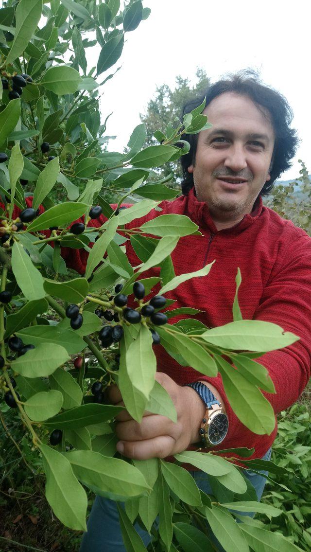 ormandan-topladigi-defne-yapraginin-tonunu-9-bin-liradan-satiyor_6868_dhaphoto1