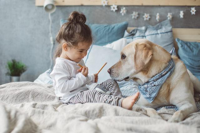 bebek ve evcil hayvanlar