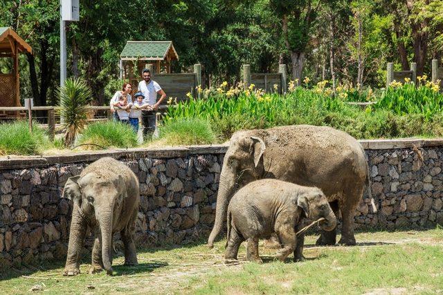 Doğa Yaşam Parkı 8.4 milyon ziyaretçiyi ağırladı