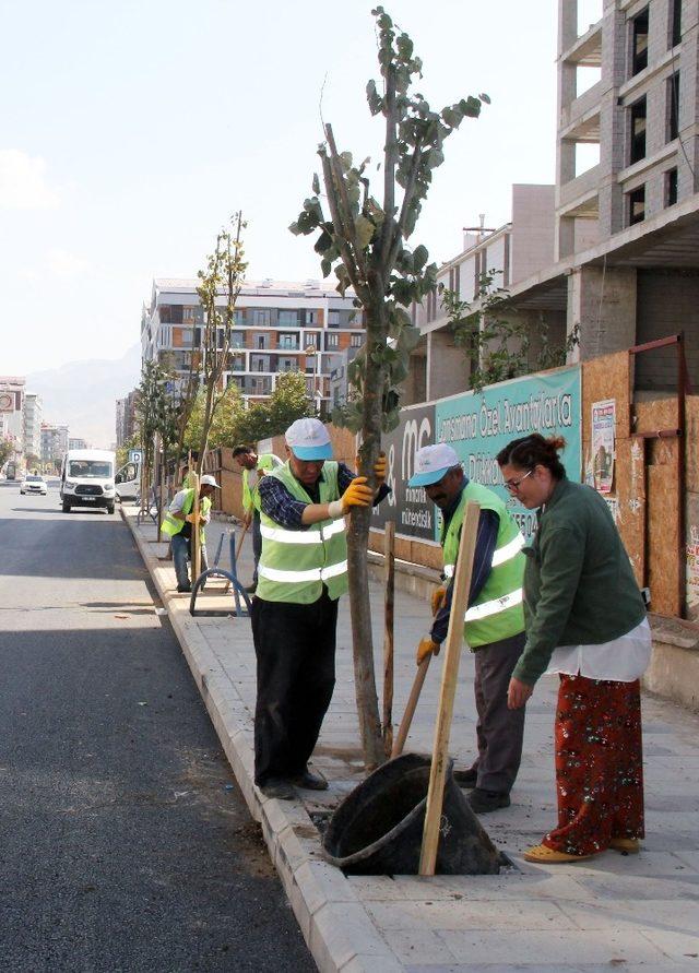 İskele Caddesi'nde yeşillendirme çalışması