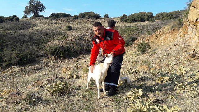 Uçurumda mahsur kalan keçiyi, itfaiye kurtardı