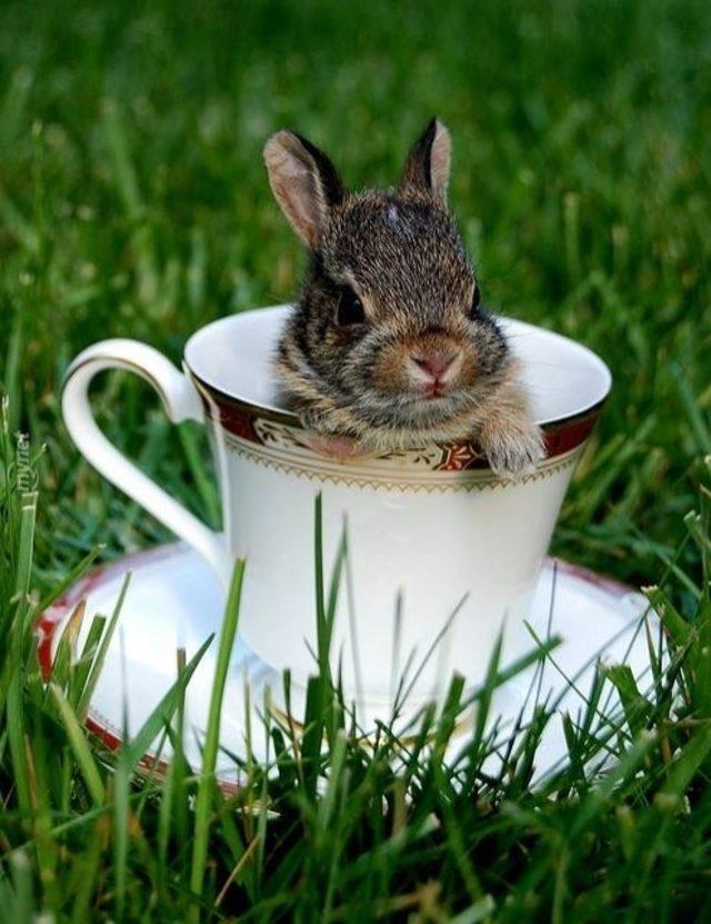 Смешные картинки с зайцами доброе утро
