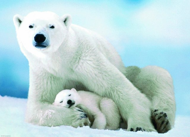 eurographics-puzzle-1000-parca-polar-bear-and-baby-6000-1198_35