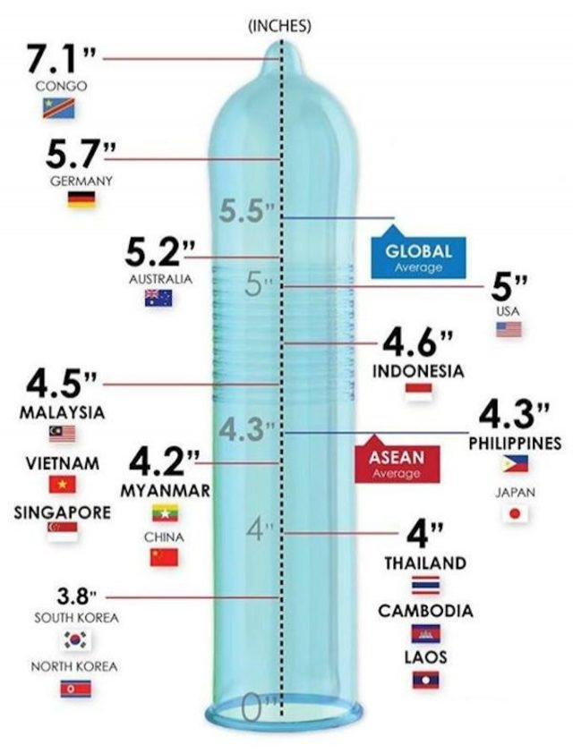 sizes-of-the-penis