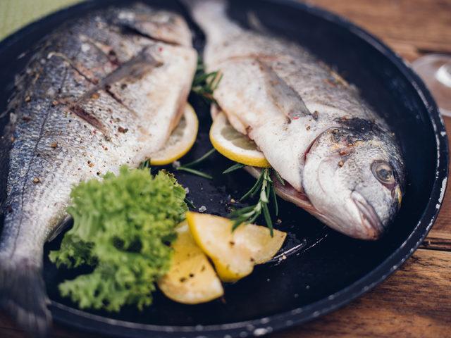 balık4